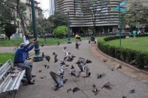 Domingos jogando alimento para os pássaros.